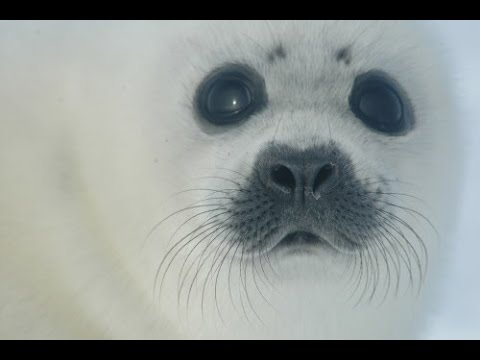 Jackie Evancho: A Voice for Seals