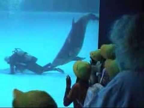 VISIT: WWW.CHARLEMAGNETHEFISH.COM Dolphin wants to play. Diver works and won't play. Dolphin does what dolphins do. Children laugh. Sponsored by charlemagnet...