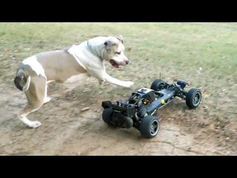 Dogs Chasing Baja 5b RC Car