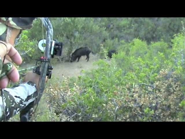 CAZA CON ARCO MYWAYBOWHUNTING WILD BOAR BOWHUNTING