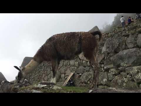 Salkantay Trek to Machu Picchu - GoPro 2016