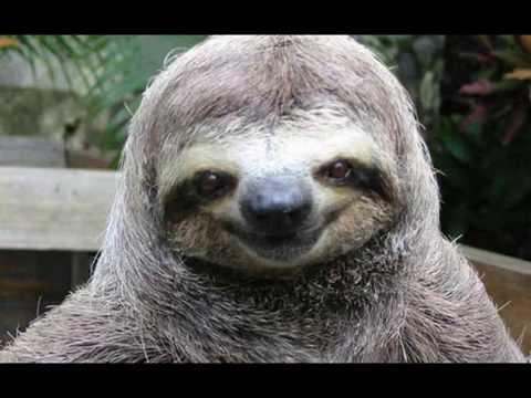 Most Weirdest Animals In The World, Bizarre Animal Creatures That Really Exist