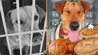I broke this shelter dog out for Thanksgiving!