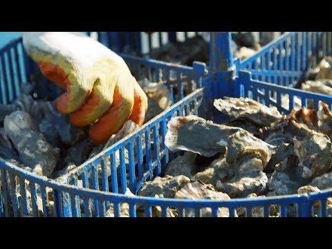 Анапа: устрицы по соседству с элитными дачами | НЕИЗВЕСТНАЯ РОССИЯ