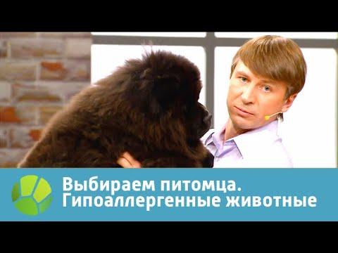 Выбираем питомца с Алексеем Ягудиным. Гипоаллергенные животные