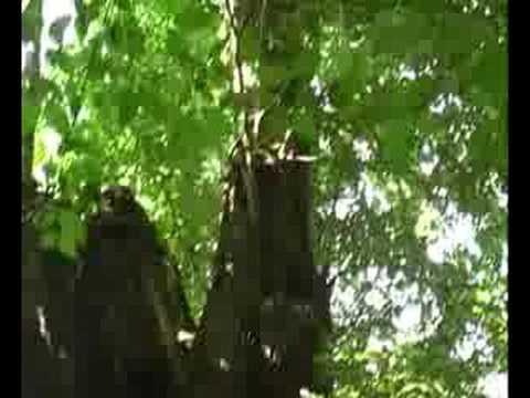 druni me i vjeter dhe me i madh ne diber