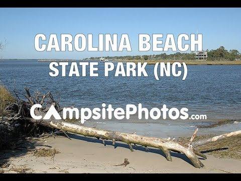 Carolina Beach State Park, North Carolina Campsite Photos