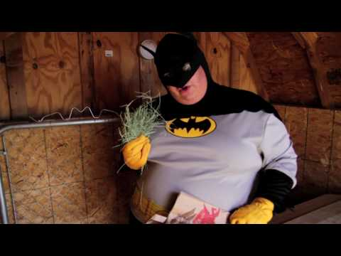 How To, Batman! - How to Feed Some Goats