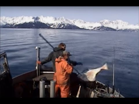 Commercial fishing for halibut in Alaska