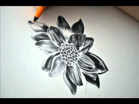 Drawing 5 Black Dahlia by