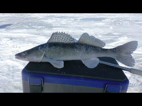 Открытие сезона на Волге. Зимняя рыбалка 2018. Ловля судака зимой на тюльку на Волге