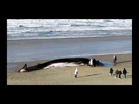 TERREMOTO TSUNAMI JAPON 11-3-2011 SECRETO HALLARON MONSTRUOS HORRIBLES