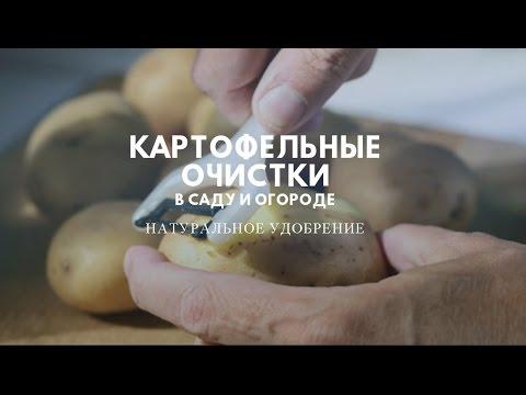 Удобрение картофельными очистками – как правильно приготовить?