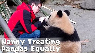Nanny Treating Each Panda Equally With Bamboo Shoots | iPanda