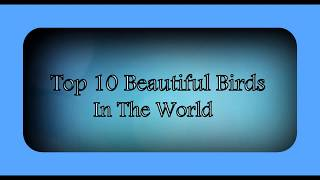 Top 10 Most Beautiful Birds in the World .