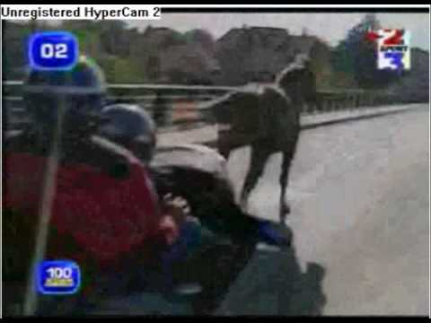 Horse joins in on the Tour de France
