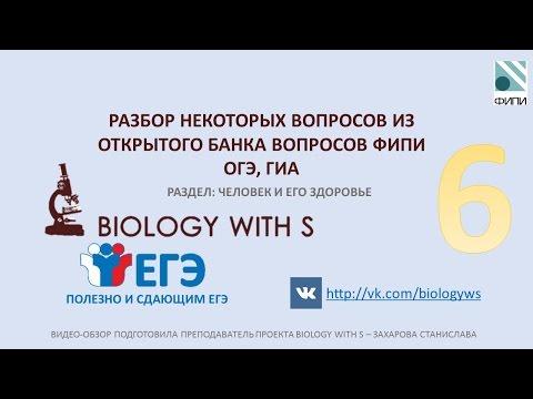 Разбор вопросов ОГЭ, ГИА (ФИПИ) от проекта Biology with S. ЧЕЛОВЕК И ЕГО ЗДОРОВЬЕ. Ч.6