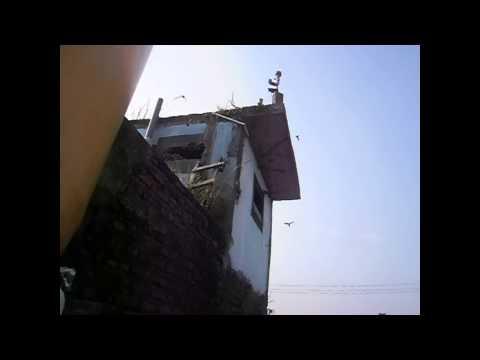Suara Walet Original Z1000 By: Kang Mas Kelod & Ahmad Mulyadi video