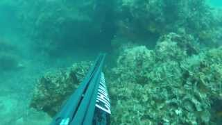 Spearfishing in İzmir/TURKEY 04-05-2014 Dentex-Corvina-Sargo