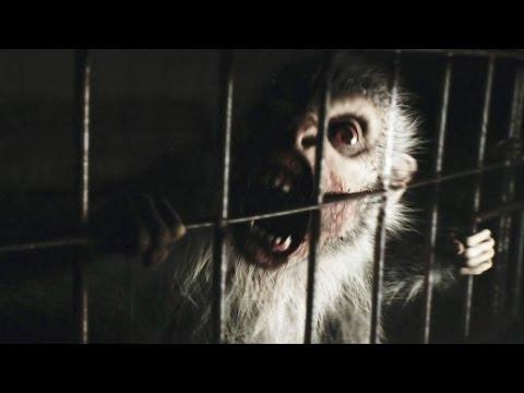REC 4 Apocalypse Bande Annonce (2014) streaming vf