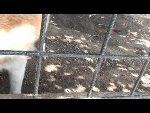 Cuccioli di siberian husky BAMBINI DIVERTENTI VLOG