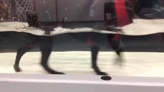 Jess Parker underwater treadmill