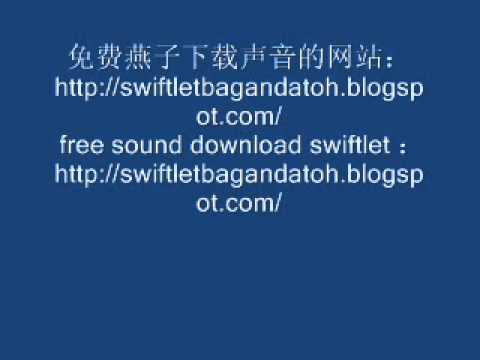 Swiftlet Sound .wmv video