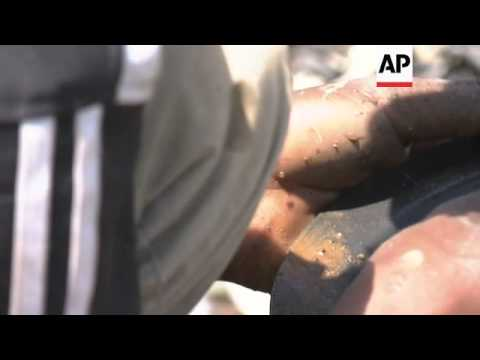 Desperate unemployed and immigrants turn to illegal gold mining