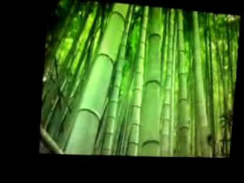 simulação escorrega no meu bambu