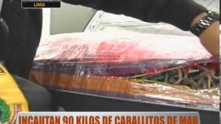 Incautan 90 Kilos De Caballitos De Mar