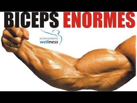 Vídeo Ejercicios Para Bíceps, Entrenamiento Para Ganar Masa Muscular Bíceps
