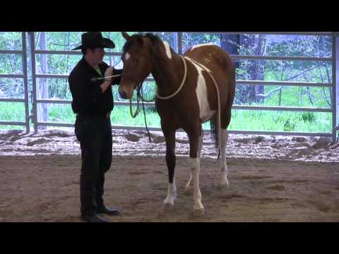 Day 4 (pt. 1) - SCEA Rescue Horse - Disengaging the Forequarters