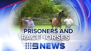 Criminals and ex-racehorses given a second chance   Nine News Australia
