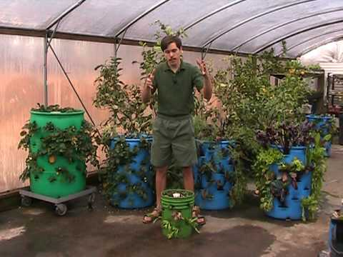 3 d vertical barrel gardening a striking use for used barrels youtube - Gallon bucket garden container ...