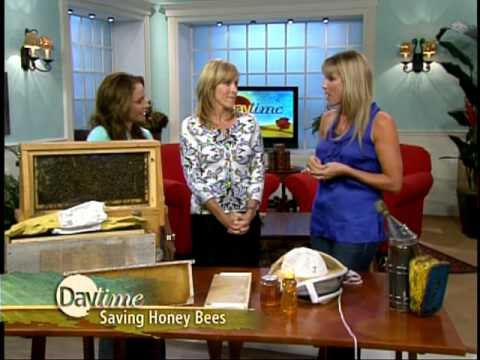 Kelly Diedring Harris on Daytime with bees!