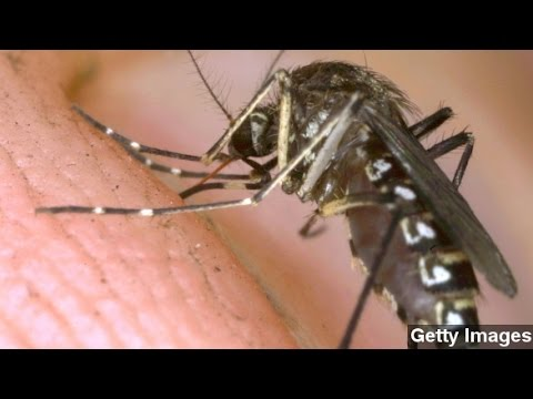 Chikungunya Virus Contracted In U.S. For First Time