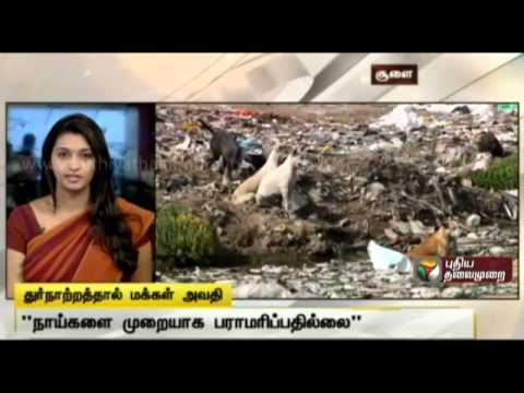 Badly maintained dog shelter creating health problems for citizens in Choolai