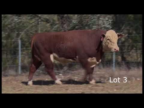 Lot 3 Elite N093 L271