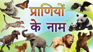 50 Animals Names In Hindi | जानवरों के नाम | Hindi Mein Praniyo Ke Naam | प्राणियों के नाम हिंदी में