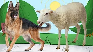 Learn Animals For Children in English ❤ Wow Toddlers ❤  Learn Animals Name and Sounds For Kids
