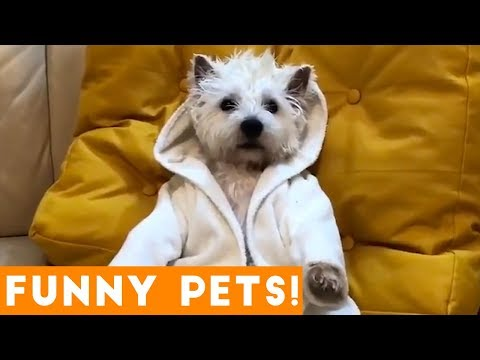 Cutest Pets & Animals of the Week Compilation August 2018 | Funny Pet Videos