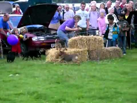 Coniston Show 2007 Terrier Racing.mp4