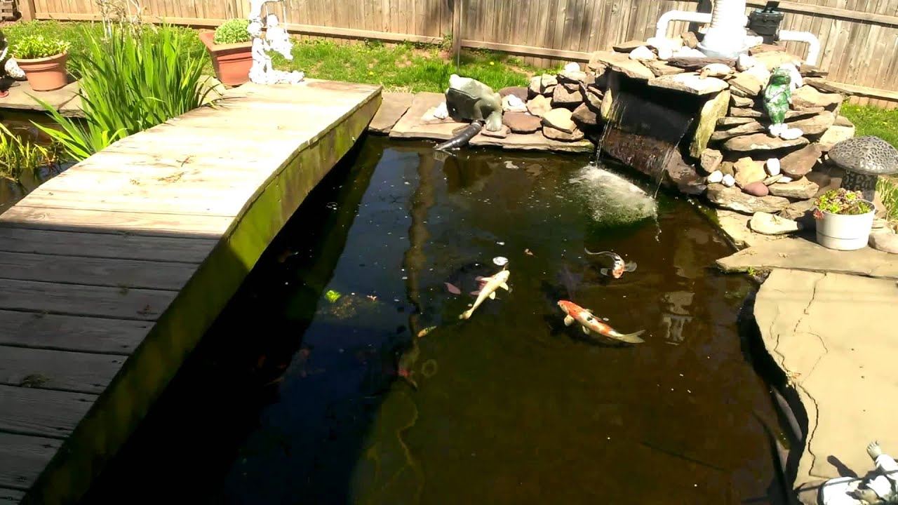 My fish pond in my backyard youtube for Big fish pond