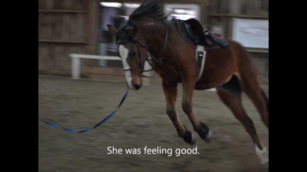 Reins For Lunging a Horse
