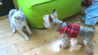 CAT vs DOG - Meeting For The First Time (Prankie vs Sam)
