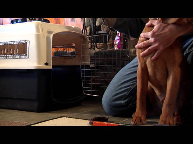 D.T. the Dog Training Video 2   Socializing and Crate Training