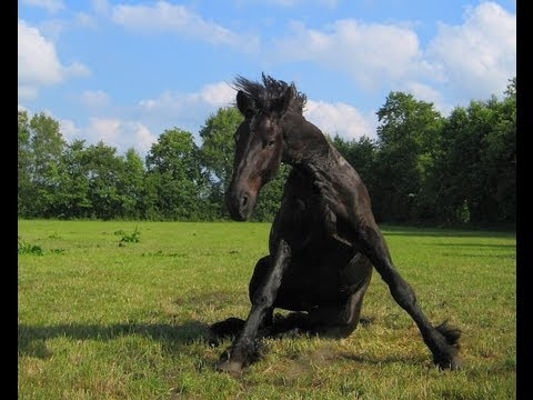 Horse Riding Fails Compilation