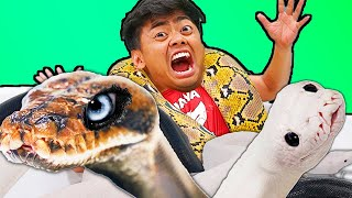Giant Snake Hot Tub Bath Challenge!