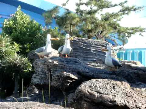 Mine! Mine!  Finding Nemo seagulls at Disney