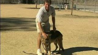Basic Dog Training Tips : How to Train a Dog to Stand & Stay